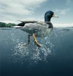 Duck Paddling